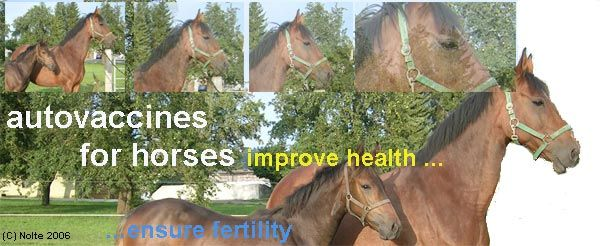 autovaccines for your horse: improve health and ensure fertility